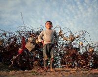 Palestine Faces Genocide – Israel Deserves Its Pariah Status