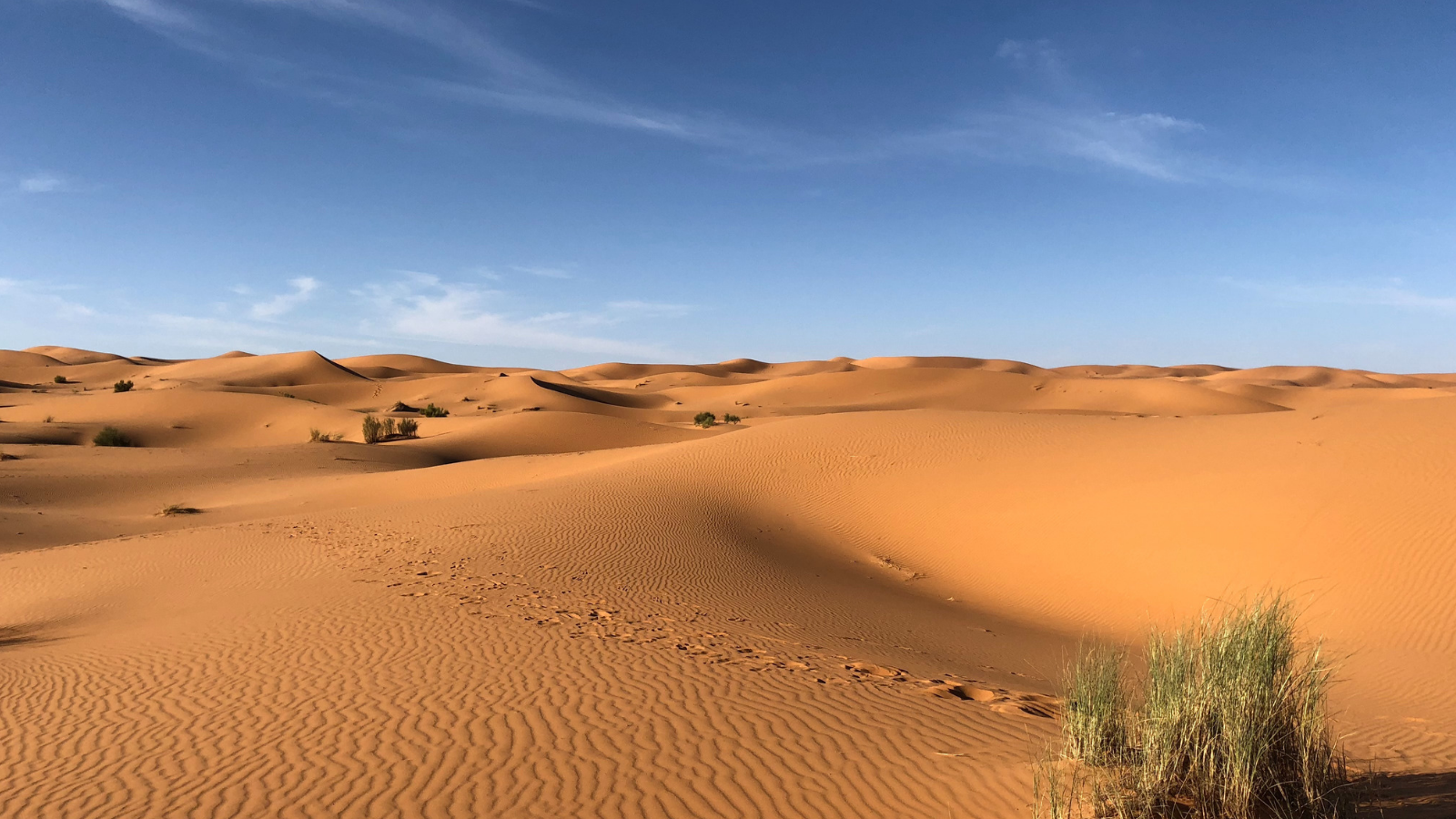 Trump Wants Spain to Build a Wall Across the Sahara Desert
