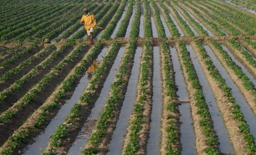 Farmers in distress as agrarian crises haunt India