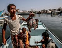 As Yemeni Fishermen Risk Their Lives to Feed Their Nation, Saudis Use Them for Target Practice