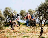 """Well-Known Zionist Settler-Activist Sees More Land Grabs and a """"Greater Israel"""" as a Given"""