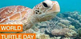 Lima zoo celebrates World Turtle Day with flowers
