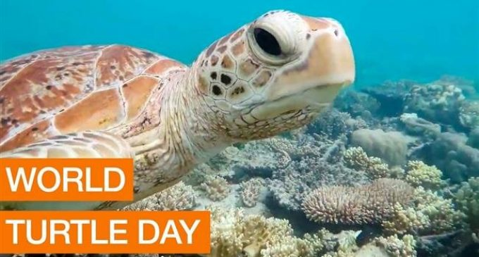 Lima zoo celebrates World Turtle Day with flowers