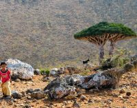 Trying to Hold Its Own, Yemeni Island of Socotra Figures in Both Saudi and Emirati Plans