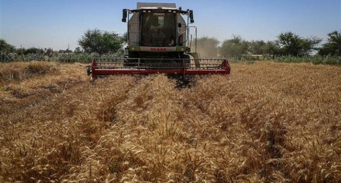 Iran's 2020 buying price for wheat sparks discontent among farmers